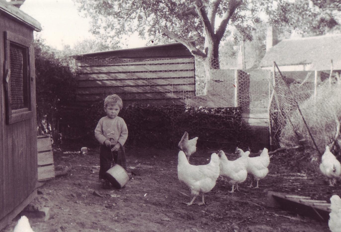 cb chickens 1961
